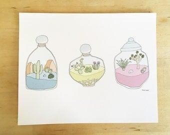 Three desert terrariums cactus color illustration giclee art print