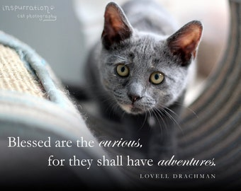 Blessed are the curious, for they shall have adventures // cat quote print // cat wall art // animal quote print