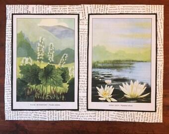 vintage botanical prints #1 (Wild Flowers - 1926)