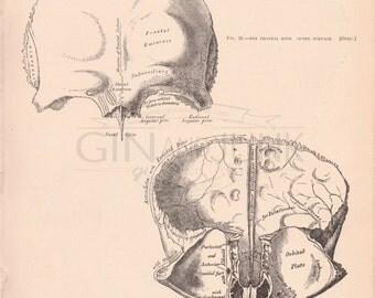 Vintage Human Skull Drawings - Antique Human Skull Drawings from 1898