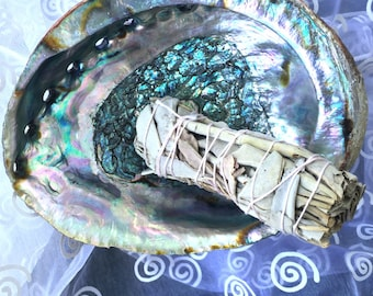 Abalone! Abalone Shell for Smudging in the House! FREE sage bundle included. Can be used to burn Incense too!