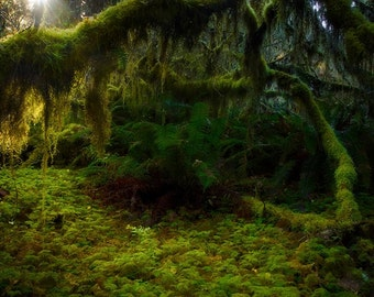 Paradise, hoh rain forest, rain forest, rainforest, washington, hoh, moss, forest, nature, wall art, photography,