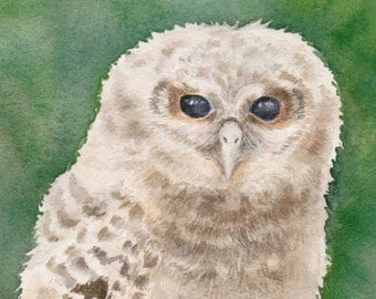 Baby Owl Watercolor, Owl Painting, Original Watercolor