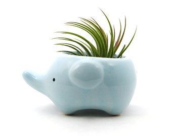 Air Plant & Holder Gift Set // Tillandsia with Ceramic Elephant Pot // Hello Tilly AirPlant