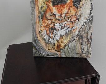Screech Owl Original Acrylic Painting on canvas, owl painting, owl art, screech owl art, painting of an owl, owl home decor, Woodland art