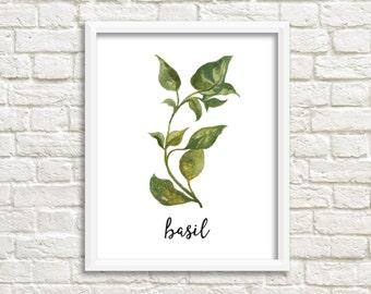 Watercolor Basil Herb Printable Wall Art Botanical Herb Print Herb Printable Basil Wall Art Basil Printable Kitchen Decor Kitchen Wall Art