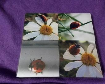 Ladybug photo coaster set