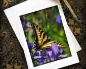 Butterfly Card Tiger Swallowtail Photograph with Envelope