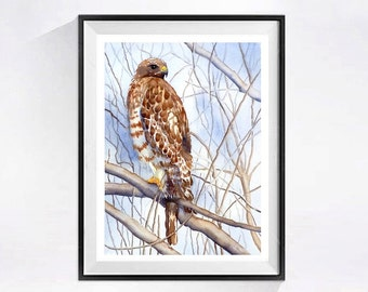Birds of Prey Watercolor Art Print  Watercolor painting Hawk painting Hawks wildlife painting Falcon art Hawking art  Falconry painting