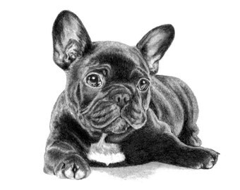 Dog Portrait Dog Sketch Custom Pet Portrait 5x7