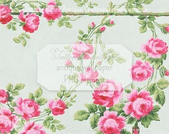 Cabbage Roses Climbing Garden Rose 13x18 Large Antique Wallpaper PNG ClipArt Elements