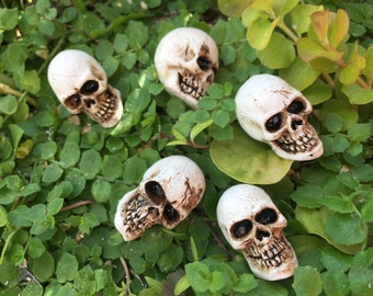 Miniature Skulls, Packaged Set of 5 Pieces, Fairy Garden Accessory, Miniature Gardening, Home and Garden Decor, Halloween Deco, Topper
