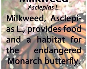 Organic Wildcrafted Milkweed Seeds (Asclepias L.)