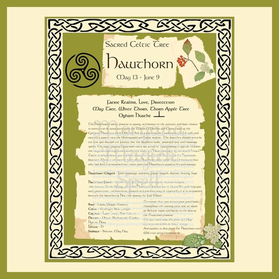 HAWTHORN CELTIC SACRED Tree -  Digital Download, Book of Shadows Page,Grimoire, Spells, White Magick, Wicca, Witchcraft, Herb Magic
