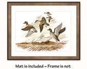"""Duck Art Print w/Mat (Country Decor, Birthday Gift Idea) Matted Vintage Bird Print --- """"Green Winged Teal Duck"""" No. 24"""