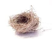 Real Bird Nest, Size Small: Craft or Art Supply - nest C