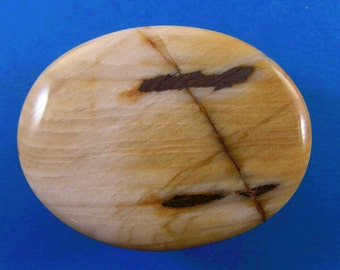 Petrified wood fossil cabochon