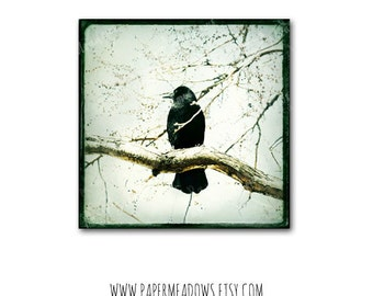 Crow Photography Download, Black Bird Photo, Square Photo, Perched Bird, Bird in Tree, Raven, Digital Image, Textured Photo, Nature Wall Art
