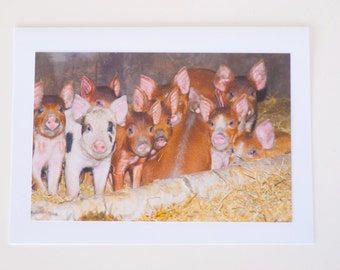 Piggies, Pigglet, Baby Pig, Greeting Card, Handmade, Photographic
