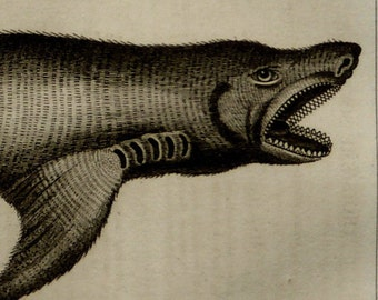 1837 Antique print of a SHARK. Sea Life. Sharks. Natural History. 178 years old engraving