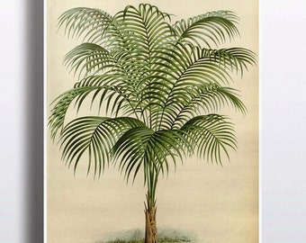 Antique 1800s Palm Tree Print Art Print Poster Palm Tree Wall Decor Nature Botanical Botany Wall Decor