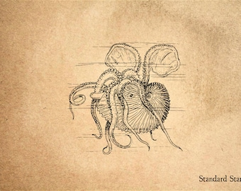 Nautilus Submerged Rubber Stamp - 2 x 2 inches