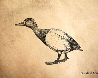 Canvasback Duck Rubber Stamp - 3 x 2 inches