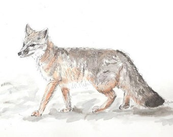 Fox Watercolor Painting - Swift Fox Ink and Watercolour Illustration Painting