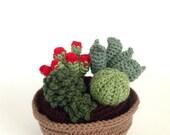 Crochet Succulent Plant Arrangement