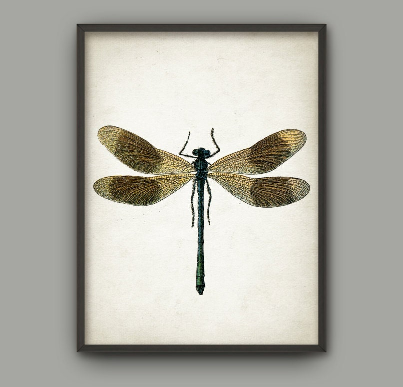 Dragonfly Wall Art Poster Dragon Fly Home Decor Entomology