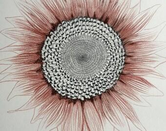 Sunflower Drawing Original Illustration