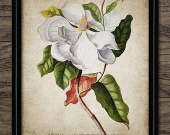 Magnolia Flower Print - White Flower Illustration - Botanical Art - Digital Art - Printable Art - Single Print #87 - INSTANT DOWNLOAD