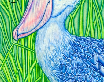 "Shoebill - 9x12"" Pencil Drawing - Museum Quality Bird Fine Art Print"