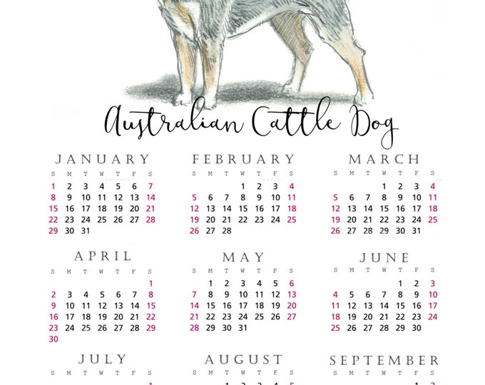 Australian Cattle Dog 2017 yearly calendar