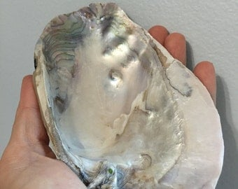 Polished Freshwater Mussel Shell ET 6-23-1