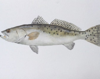 Watercolor Speckled Trout