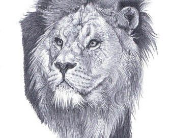MALE LION (2) Limited Edition art drawing print signed by UK artist