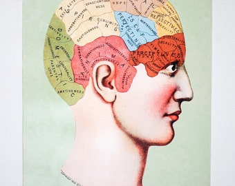 Larger Vintage REMASTERED 1903 Phrenology Brain Science Chart Poster