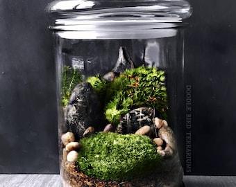 Large Terrarium Jar with Landscape Scene