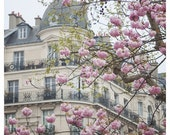 Cherry Blossoms in Paris - French architecture Haussmann building, Spring, grey, pink, pastel - 8x8 and up - Original Fine Art Photograph