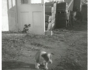 "Vintage Snapshot ""Cute Little Puppy"" Mixed Breed Rescue Dog - Blur Action Motion - Black & White Photo"