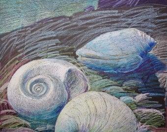 SHELL DREAMING DAWN - Fine Art - Large Drawing - Oil Pastel - ElizabethAFox - Beach Scene - Prehistory Painting