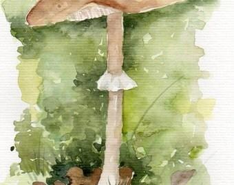 Parasol mushroom, original watercolor painting, fungi, wild mushrooms, kitchen decor,  Autum decor, woods, mushroom watercolour, original