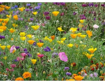 Rare Prairie Mix, annuals and perennials, flowers - 2g - UK SELLER