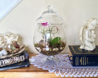 Glass Terrarium, Apothecary Jar, Orchid, Air Plant