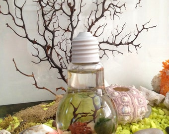 Marimo moss ball terrarium with stand/live plants/moss ball/industrial decor /home decor/office decor/planters/gift for him/gift for her
