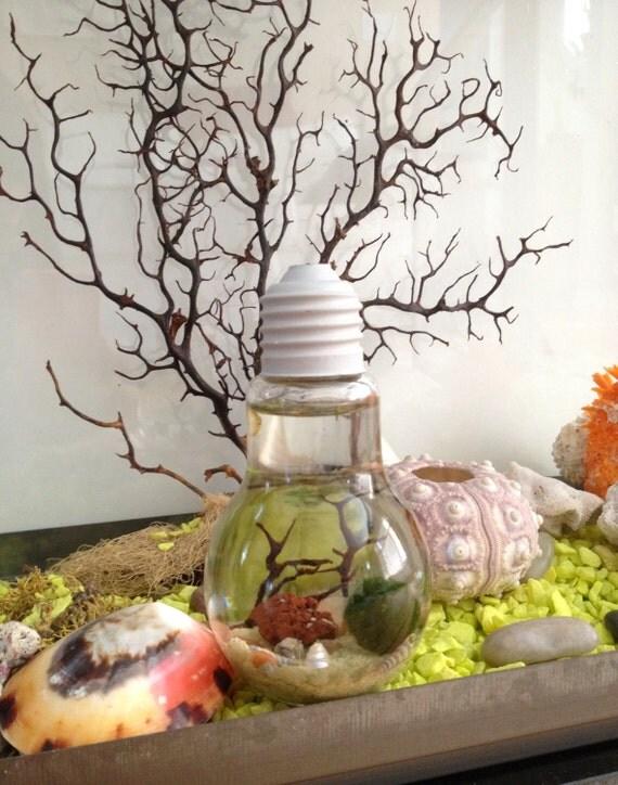 mc coy mousse boule terrarium en r sine avec support live. Black Bedroom Furniture Sets. Home Design Ideas
