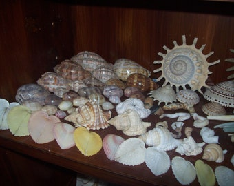 Collection of Various Shells and a Starfish from an Old Collection
