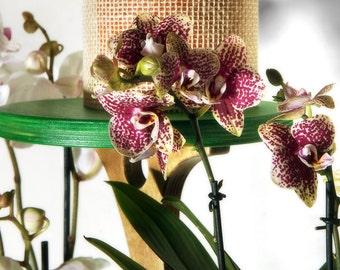Alba Flower-stand