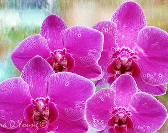 four pink orchids orchid art print pink flowers orchid flower petals mothers day gift for her home wall decor fine art photography: day orchid decor